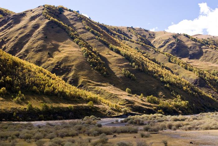 川藏夏季风景图片