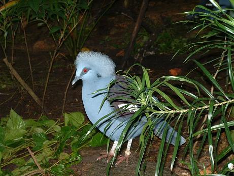 有趣的新加坡动物园
